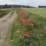 Blühstreifen in Herford