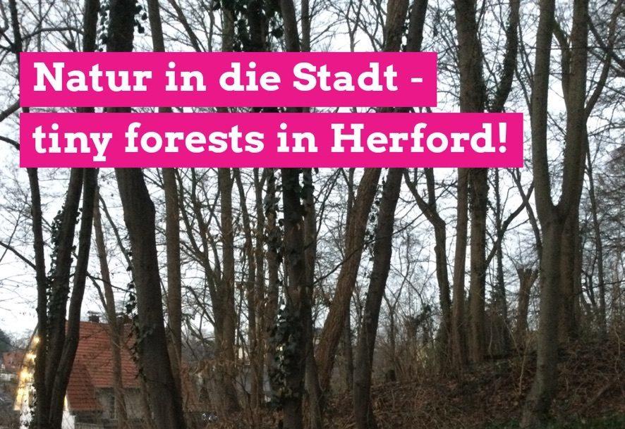 """GRÜNE wollen mehr Grün in der Stadt/""""Errichtung von Miniwäldern – tiny forests – auch in Herford prüfen"""""""